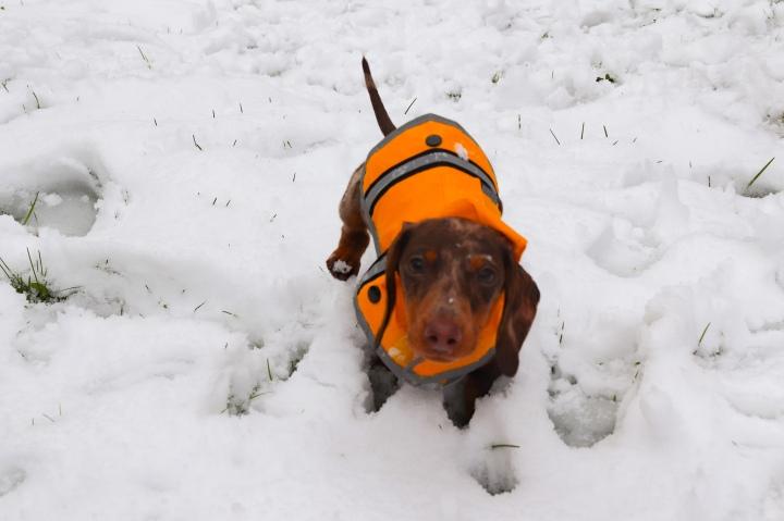 Snow Day inSpring